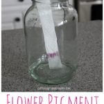 Science for Kids: Flower Pigment Experiment