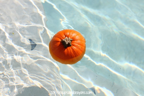 Pumpkin Sink or Float Activity
