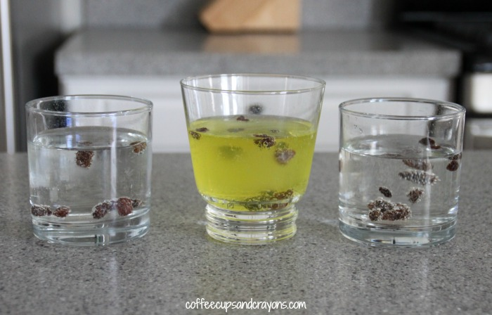 Dancing Raisins Cool Science Experiment with Soda!