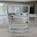 Apple Seed Science Experiment