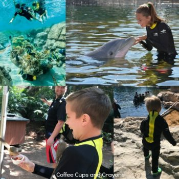 Visiting Discovery Cove Orlando with Kids